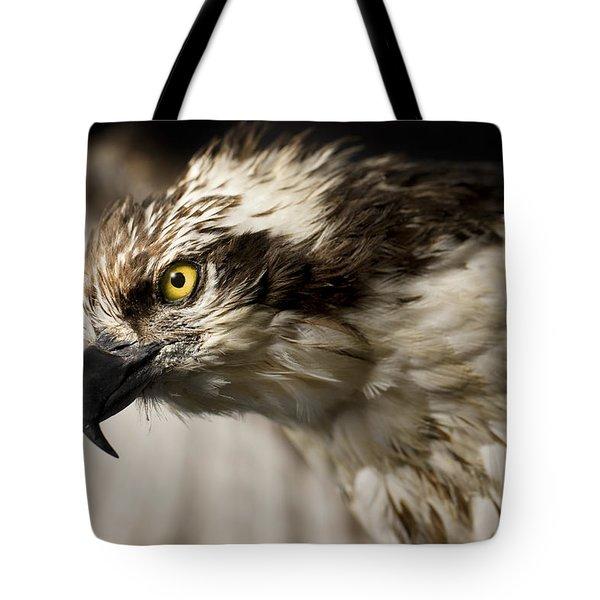 Osprey Tote Bag by Adam Romanowicz