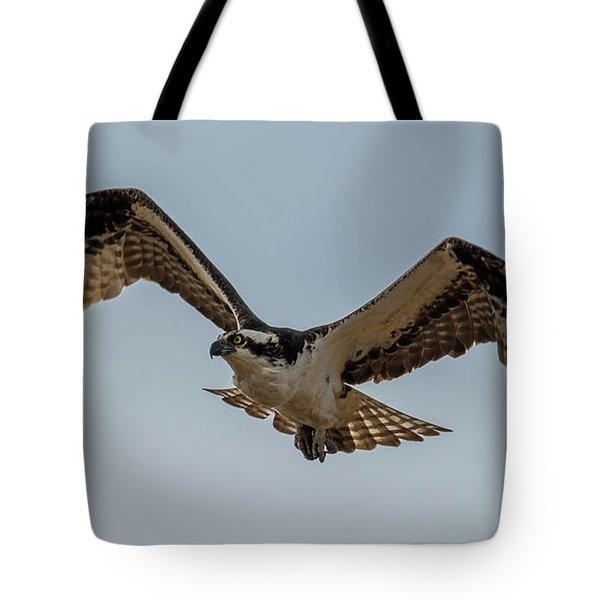 Osprey Flying Tote Bag by Paul Freidlund