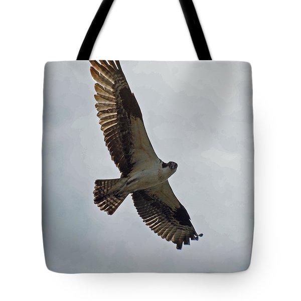 Osprey In Flight Tote Bag by Ernie Echols