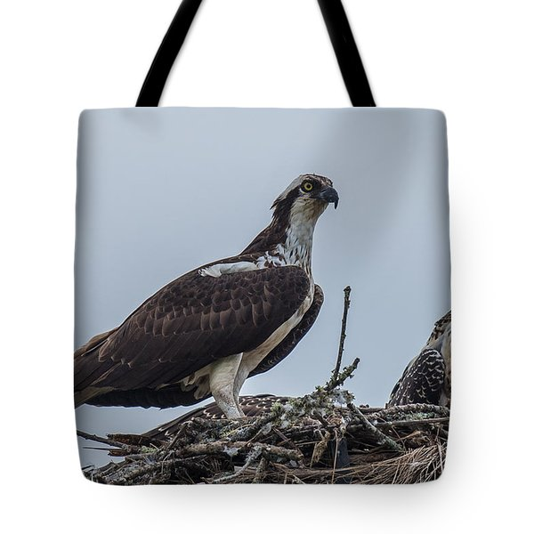 Osprey On A Nest Tote Bag by Paul Freidlund