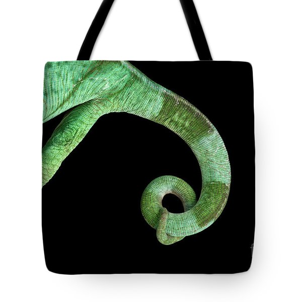 Parson Chameleon, Calumma Parsoni On Black Background, Top View Tote Bag by Sergey Taran