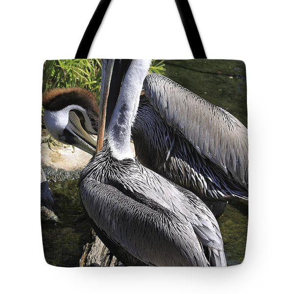 Pelican Duo Tote Bag by Deborah Benoit