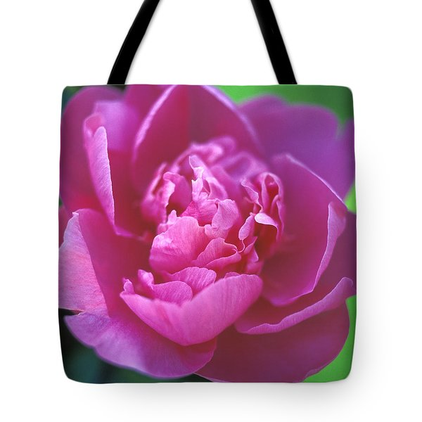 Peony in Pink Tote Bag by Kathy Yates