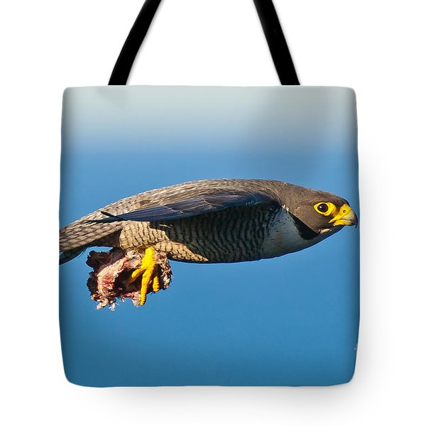 Peregrine Falcon 2 Tote Bag by Michael  Nau
