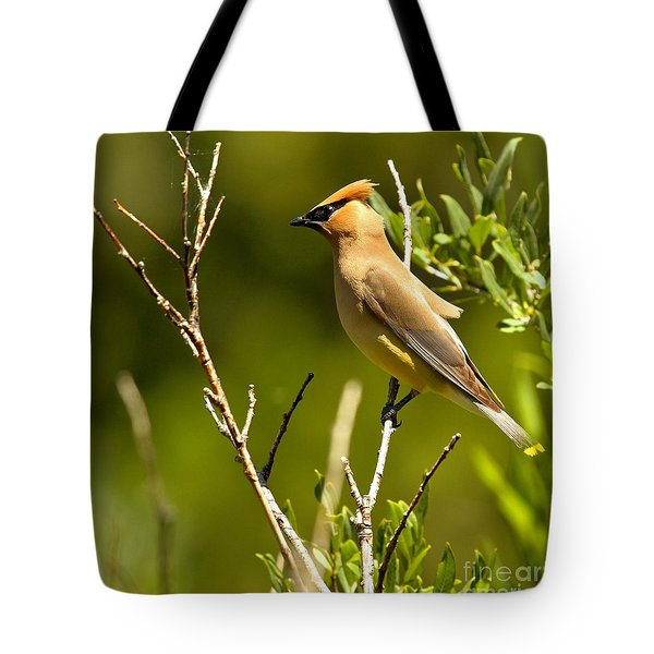 Perfectly Perched Tote Bag by Adam Jewell