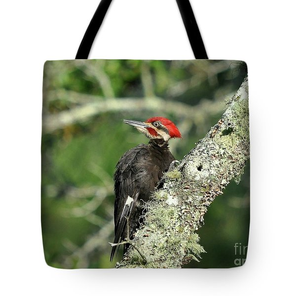 Pileated Perch Tote Bag by Al Powell Photography USA