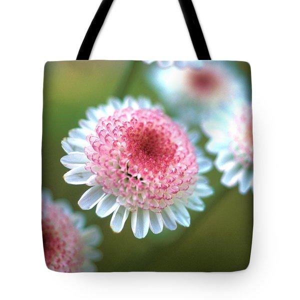 Pincushion Flowers Tote Bag by Kathy Yates