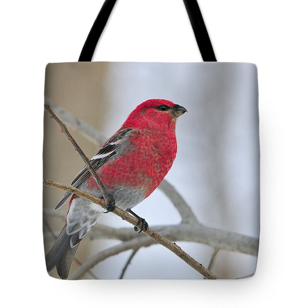 Pine Grosbeak Tote Bag by Tony Beck