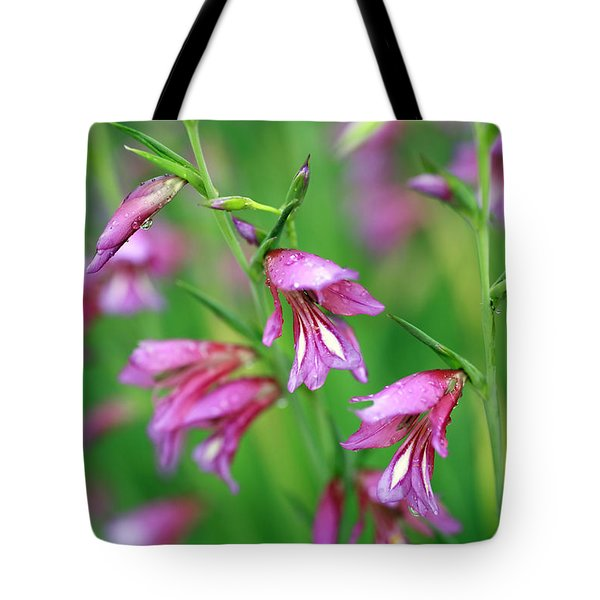 Pink Flowers Of Gladiolus Communis Tote Bag by Frank Tschakert