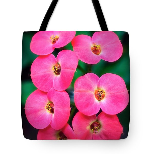 Pink Orchid Crown Of Thorns Tote Bag by Sue Melvin