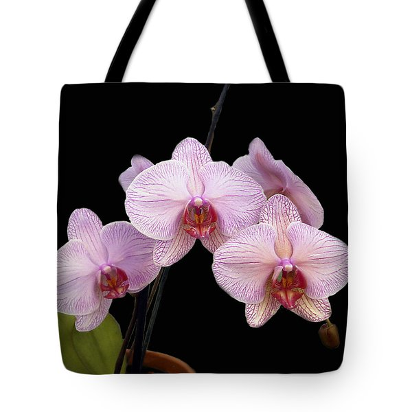 Pink Orchids Tote Bag by Kurt Van Wagner