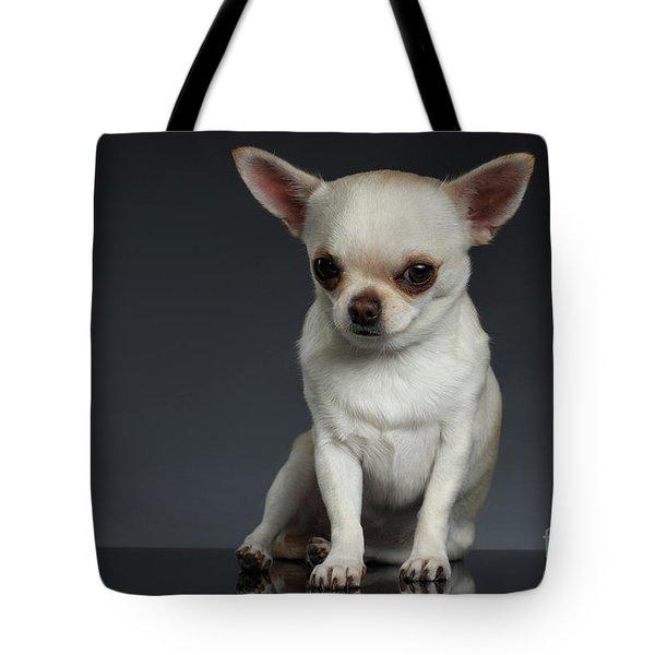 Portrait Little Chihuahua Dog Sitting On Dark Backgroun Tote Bag by Sergey Taran