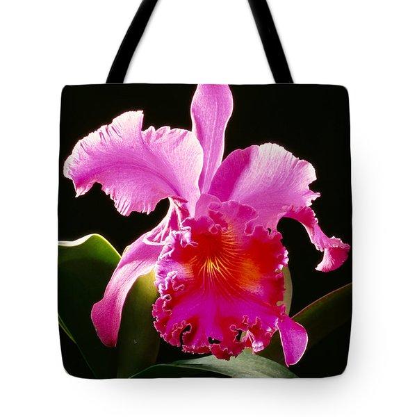 Purple Cattleya Tote Bag by Tomas del Amo - Printscapes