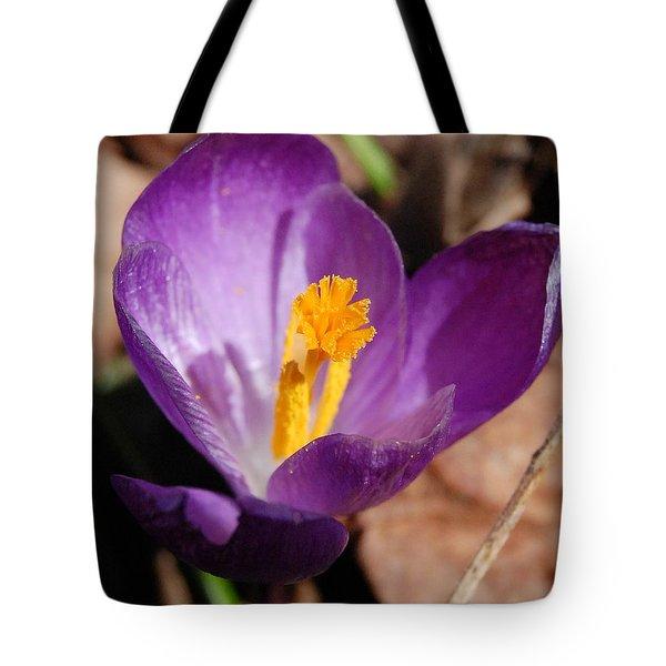 Purple Crocus Tote Bag by David Lane
