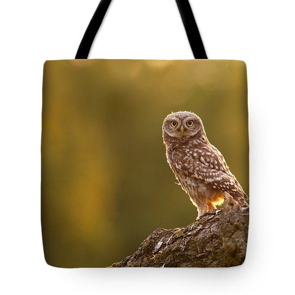 Qui, Moi? Little Owlet In Warm Light Tote Bag by Roeselien Raimond
