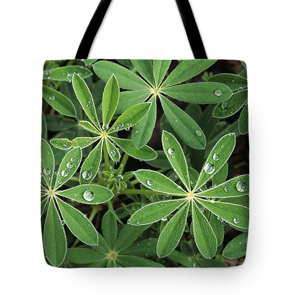 Raindrops On Lupine Tote Bag by Greg Vaughn - Printscapes