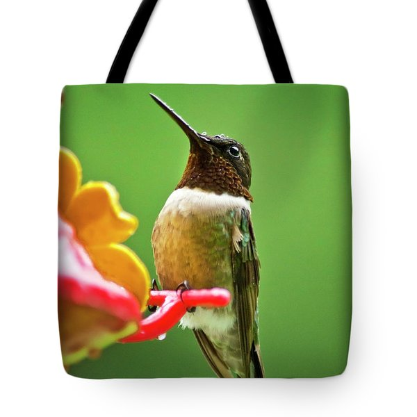 Rainy Day Hummingbird Tote Bag by Christina Rollo