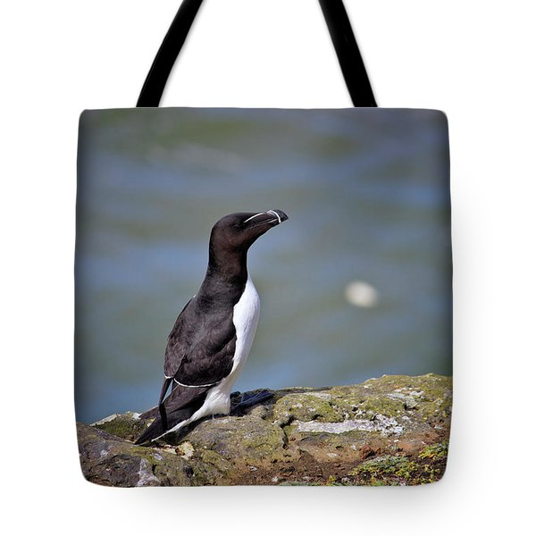 Razorbill Tote Bag by Vicki Field
