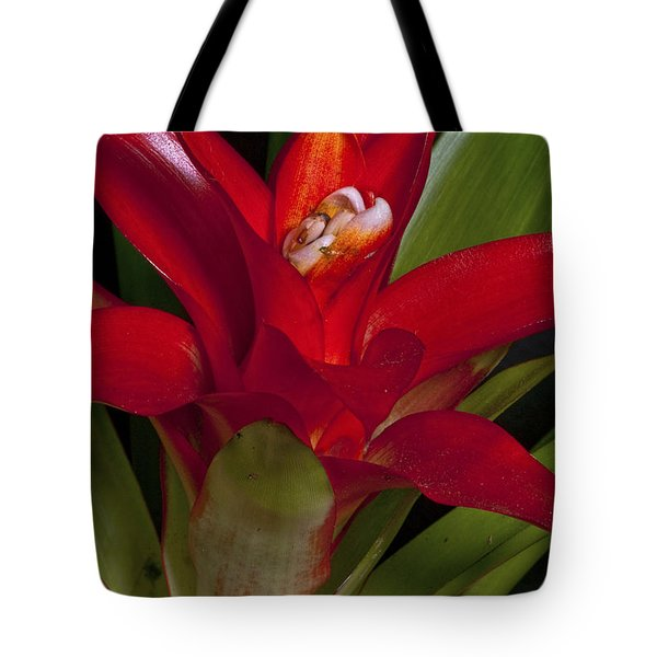 Red Bromiliad Tote Bag by Christopher Holmes