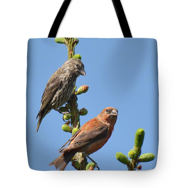 Red Crossbill Pair Tote Bag by Alan Lenk