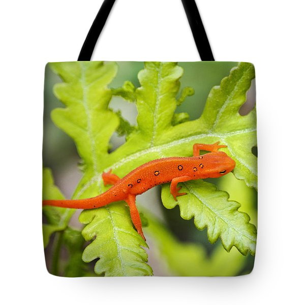 Red Eft Eastern Newt Tote Bag by Christina Rollo