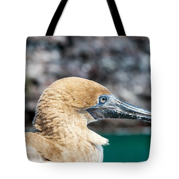 Red Footed Booby Juvenile Tote Bag by Jess Kraft
