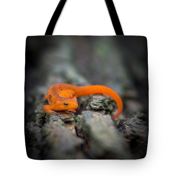 Red Spotted Newt Tote Bag by Chris Bordeleau