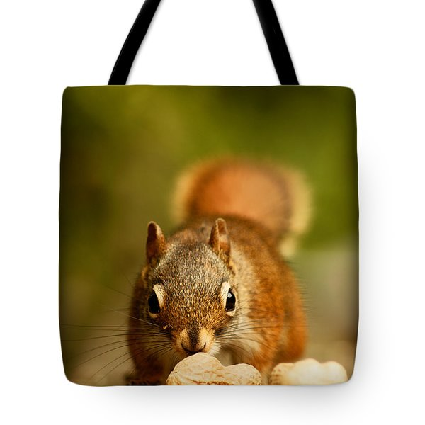 Red Squirrel   Tote Bag by Cale Best