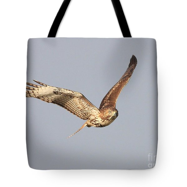 Red Tailed Hawk - 20100101-7 Tote Bag by Wingsdomain Art and Photography