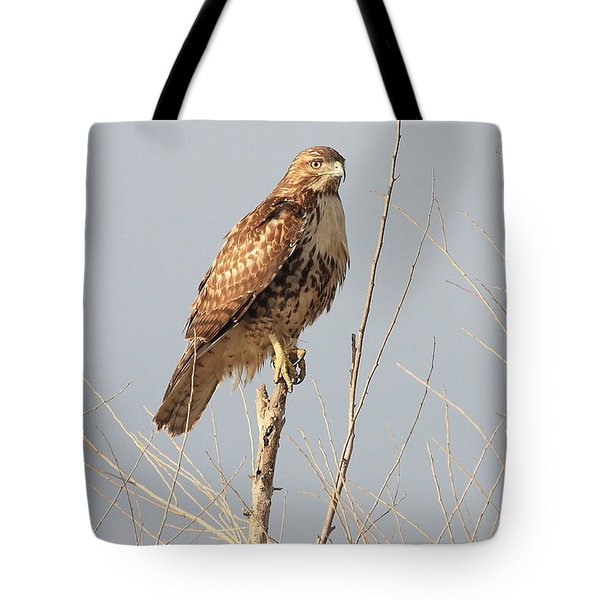 Red-tailed Hawk . 40d11323 Tote Bag by Wingsdomain Art and Photography