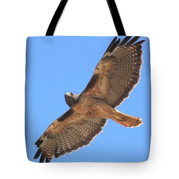 Red Tailed Hawk in flight Tote Bag by Wingsdomain Art and Photography