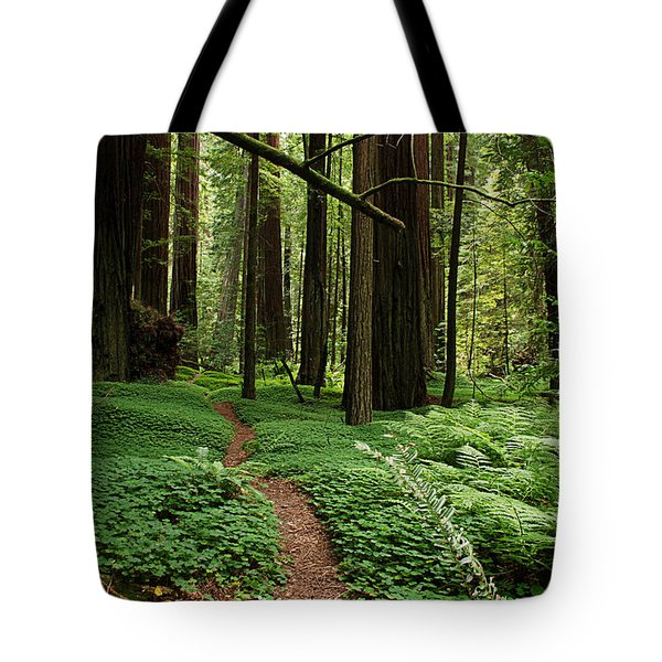 Redwood Forest Path Tote Bag by Melany Sarafis