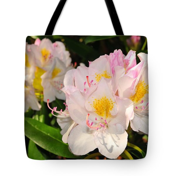 Rhododendron Tote Bag by Catherine Reusch  Daley