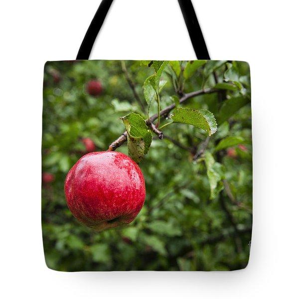Ripe Apples. Tote Bag by John Greim
