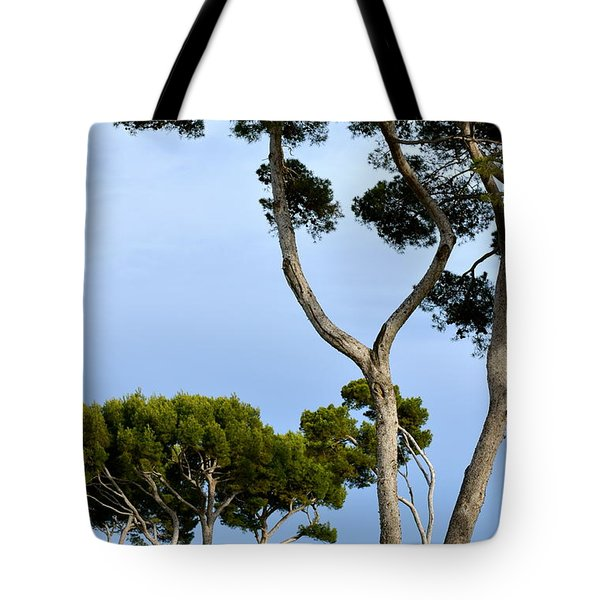 Riviera Trees Tote Bag by Corinne Rhode