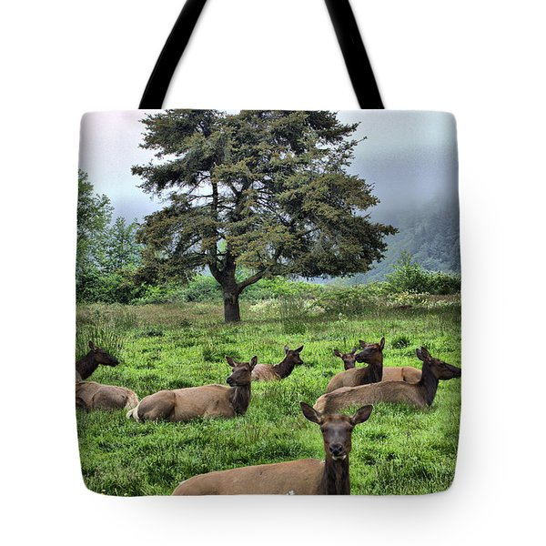 Roosevelt Elk Lounging Tote Bag by Nena Trapp