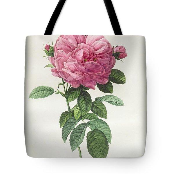 Rosa Gallica Flore Giganteo Tote Bag by Pierre Joseph Redoute