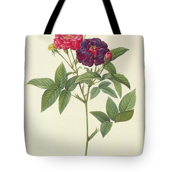 Rosa Gallica Purpurea Velutina Tote Bag by Pierre Joseph Redoute