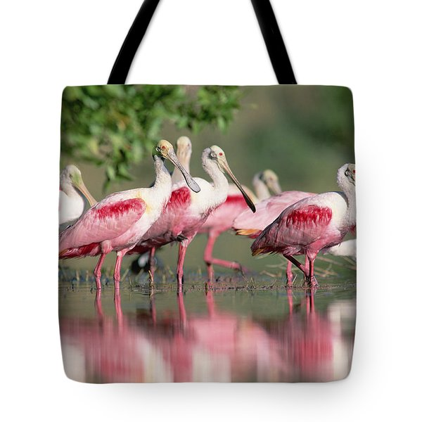 Roseate Spoonbill Flock Wading In Pond Tote Bag by Tim Fitzharris
