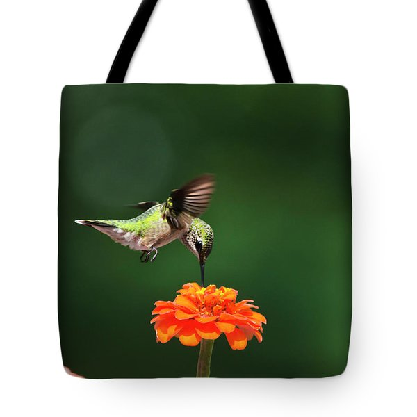 Ruby-Throated Hummingbird Feeding On Orange Zinnia Flower Tote Bag by Christina Rollo