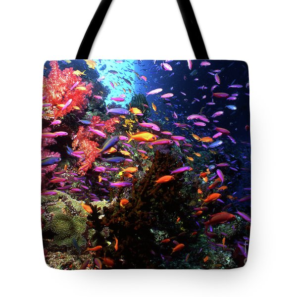 Scalefin Anthias Fish In Coral Garden Tote Bag by Beverly Factor