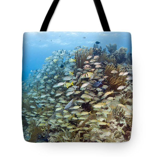 Schools Of Grunts, Snappers, Tangs Tote Bag by Karen Doody