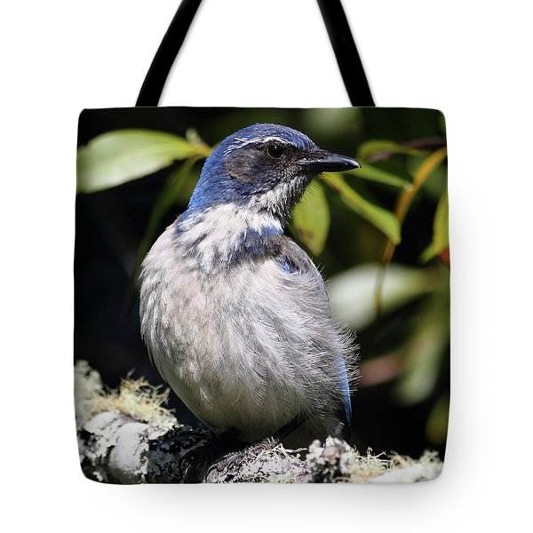 Scrub Jay . 7d6670 Tote Bag by Wingsdomain Art and Photography