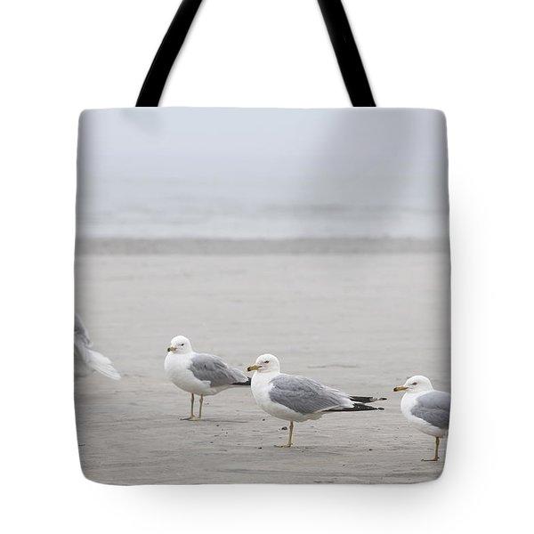 Seagulls On Foggy Beach Tote Bag by Elena Elisseeva