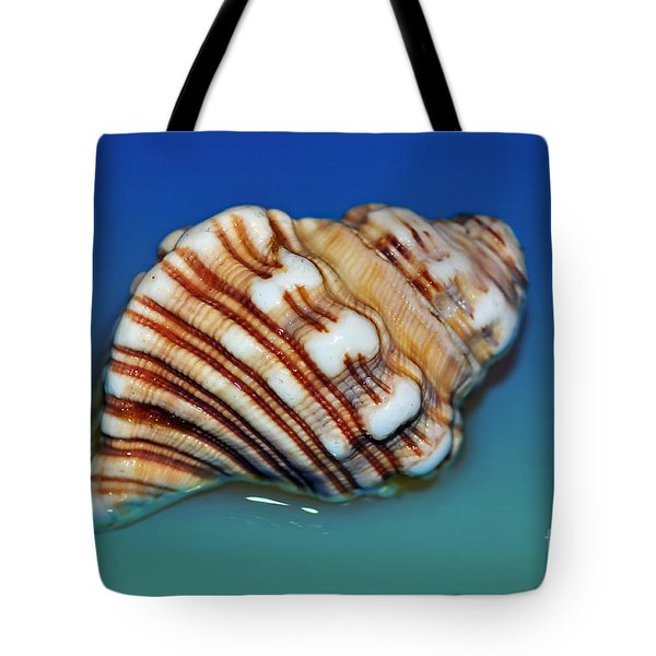 Seashell Wall Art 1 Tote Bag by Kaye Menner