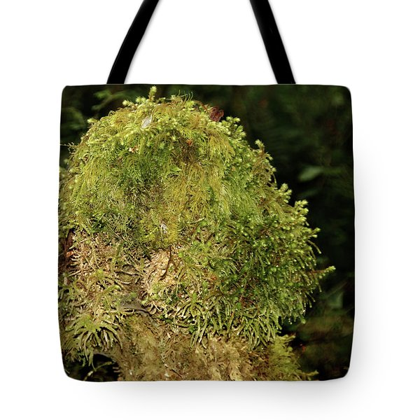 Seasons Of Magic - Hoh Rainforest Olympic National Park Wa Tote Bag by Christine Till