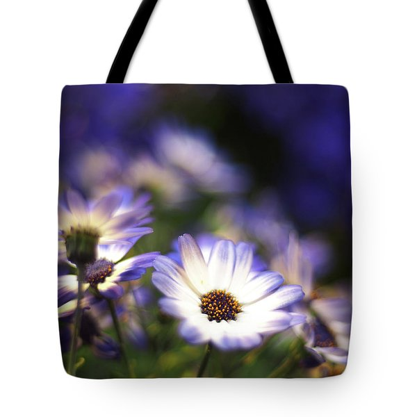 Senetti Dreams Tote Bag by Dorothy Lee