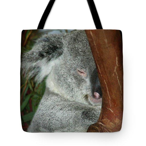 Sleeping Koala Tote Bag by Mariola Bitner
