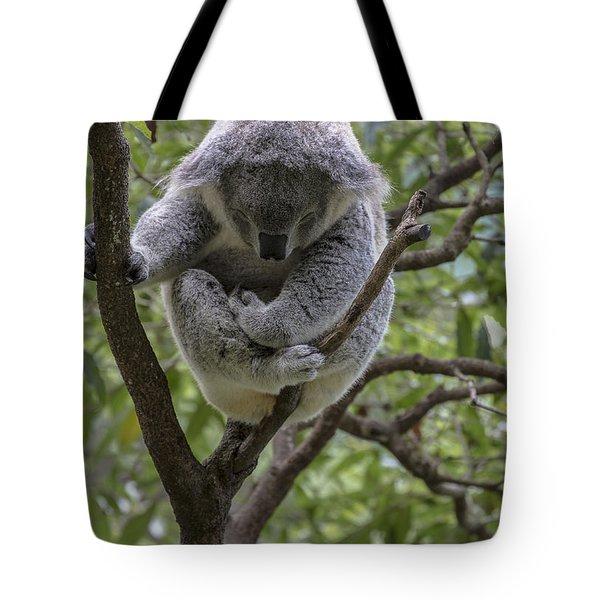 Sleepy koala Tote Bag by Sheila Smart