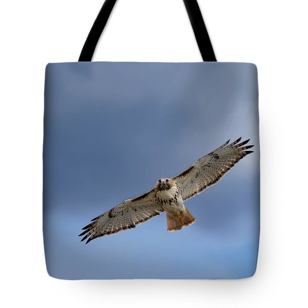 Soaring Red Tail Square Tote Bag by Bill  Wakeley